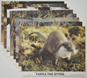 Tarka The Otter <p><a> Set of 8 Original Colour Front Of House Stills / Lobby Cards </i></p>