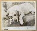 OLD YELLER (Still 5) Cinema Black and White Press Stills