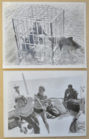 SHARK'S TREASURE (Stills 3 & 4) Cinema Black and White Press Stills