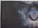 DAWN OF THE PLANET OF THE APES (Top Left) Cinema Quad Movie Poster