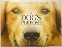 A Dog's Purpose <p><i> (Teaser / Advance Version) </i></p>